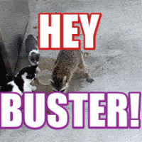 HEY BUSTER!